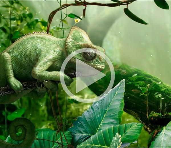 Chameleon – BNP Fortis